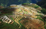 Daily VIP Guilin Longji Rice Terraces and Mountain Village Tour-China Small Group Tours
